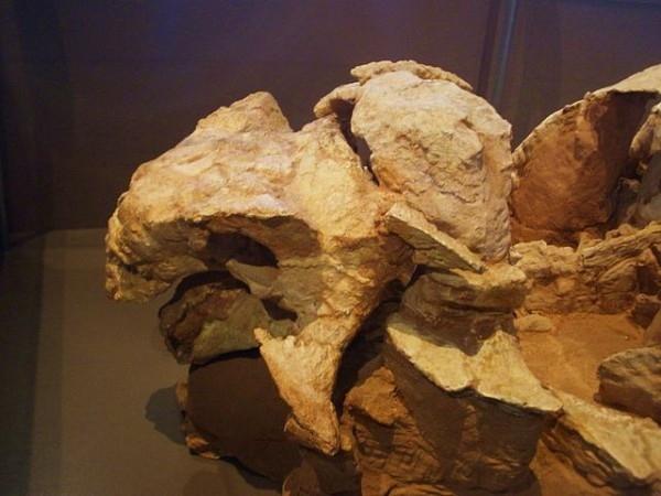 科学家新发现身披盔甲的挖土恐龙