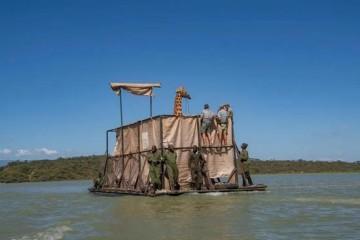 帮长颈鹿搬家先造方舟再骗长颈鹿上船